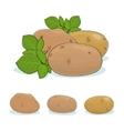 Potato Vegetable Edible Fruit vector image vector image