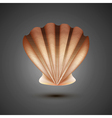 sea shell on a gray background vector image vector image