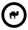 camel black icon in circle vector image