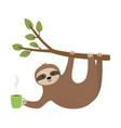cute sloth hang on twig and holding cup vector image vector image