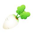 icon white radish vector image vector image
