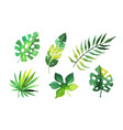 palm leaves collection beautiful tropical exotic vector image vector image