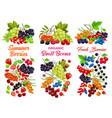 cartoon berries sweet juicy garden crop set vector image