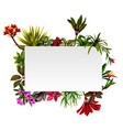frame botanical nature with flowers accents vector image vector image