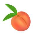 fresh peach icon realistic style vector image vector image