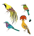 Set of tropical birds hand draw on a white vector image vector image