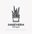succulent sansevieria in pot thin line icon vector image vector image