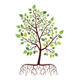 Tree with roots and green leaves vector image vector image