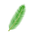 tropical palm leave vector image vector image