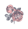 branch hand drawn vinage roses isolated on vector image