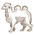 camel isolated sketch african desert animal with vector image vector image