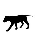 dog silhouette walking vector image vector image