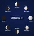 phases moon vector image