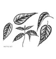 set hand drawn black and white nettle vector image vector image
