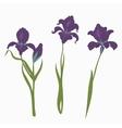 set three irises isolated on white background