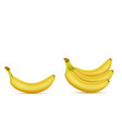 3d realistic yellow banana bunch vector image