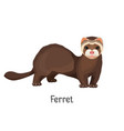 ferret domesticated form of european polecat vector image vector image
