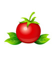 tomato ripe vegetable vector image vector image