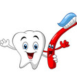 cartoon dental tooth holding toothbrush vector image vector image