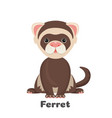 ferret animal with wide open eyes vector image vector image