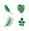 green leaves tropical palm plants and trees vector image