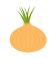 onion ripe bulb with green sprout icon yellow vector image
