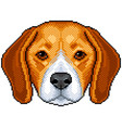 pixel beagle dog portrait detailed isolated vector image