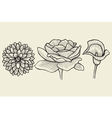 flowers - hand drawn collection vector image