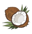Coconut isolated on white background vector image