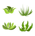 isolated object garden and grass icon vector image