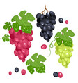 photo realistic grape set full editable isolated vector image
