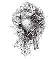 field sparrow vintage vector image vector image