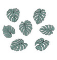 monstera leaves vector image vector image
