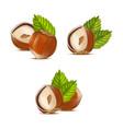 realistic detailed hazelnut nut vector image vector image