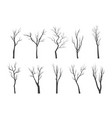 tree branch silhouette set bare twisting stems of vector image