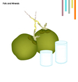 Coconut with Fats and Minerals on White Background vector image