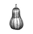 hand sketched pumpkin butternut squash drawing t vector image