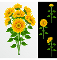 Bouquet from yellow sunflowers on a white backgrou vector image