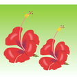 hibiscus flowers vector image vector image