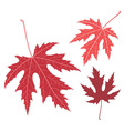 Red leaf Maple vector image
