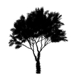 black tree silhouette isolated on white background vector image vector image