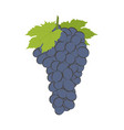 bunch of wine grapes on white vector image