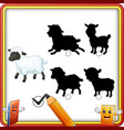 find the correct shadow cartoon funny sheep educ vector image
