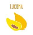 Lucuma vector image vector image