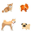 set of different dogs vector image vector image