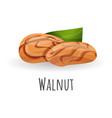 walnut icon cartoon style vector image vector image