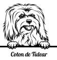 peeking dog - coton de tulear breed - head vector image vector image
