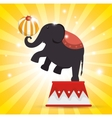 elephant balance festival funfair vector image