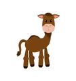 Camel animal cartoon vector image