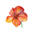 isolated watercolor orange painting flower vector image vector image
